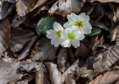 Le printemps pointe son nez